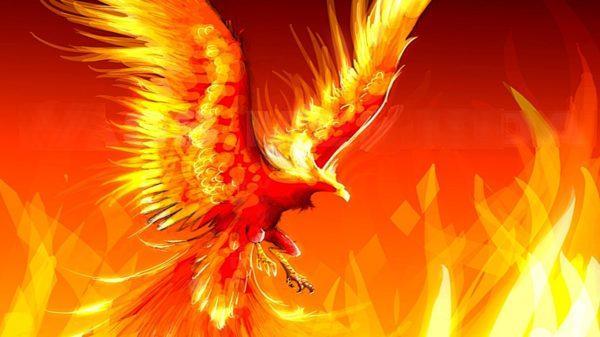 картинки огненный петух
